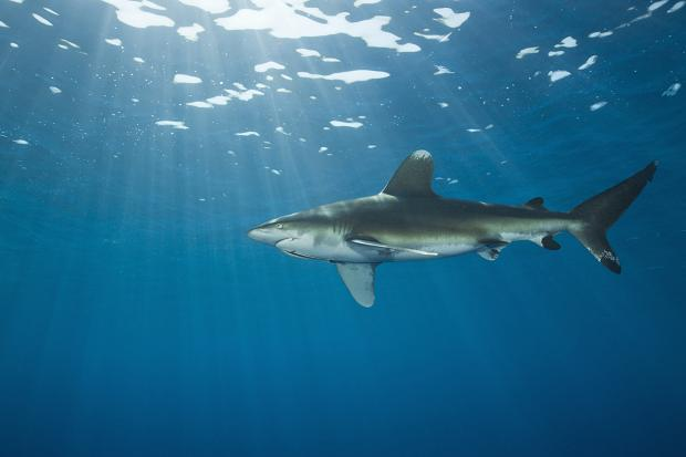 Is Sharm el-Sheikh Safe From Sharks Now