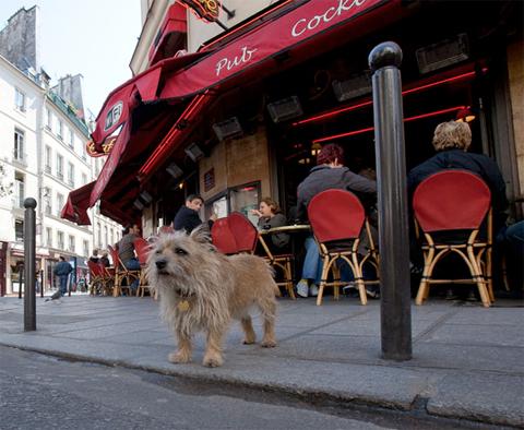 dog-standing-on-paris-sidewalk