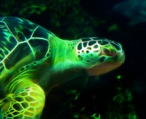 close_up_of_turtle