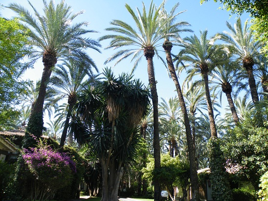 Palms_Elche